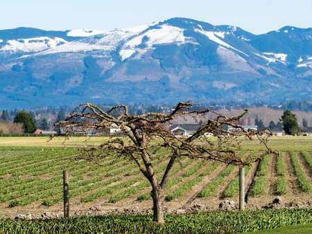 Skagit Valley farmlands in spring - Washington state, USA Stock Photo