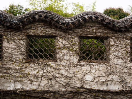Chinese garden wall covered with vines Stock Photo