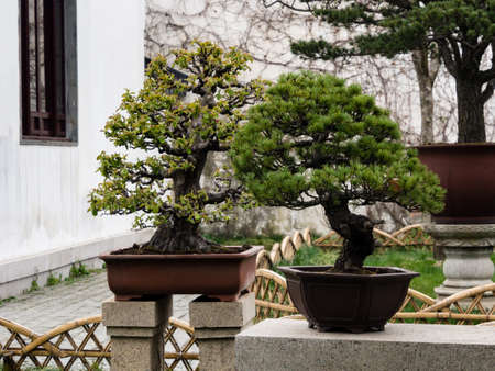 Bonsai trees in classical Chinese garden Stock Photo