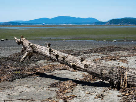 Low tide coastal scenery at Bay View State Park, WA, USA, with views across Padilla Bay to San Huan Islands