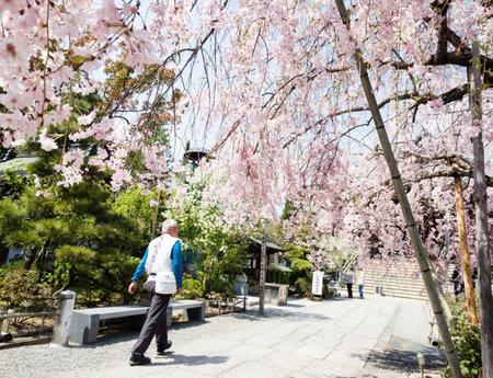 Komatsushima, Giappone - 4 aprile 2018: Pellegrino O-henro che cammina per motivi di Tatsueji, tempio numero 19 del pellegrinaggio di Shikoku, durante la stagione dei fiori di ciliegio