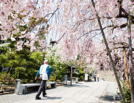 Komatsushima, Japan - April 4, 2018: O-henro pilgrim walking on the grounds of Tatsueji, temple number 19 of Shikoku pilgrimage, during cherry blossom season