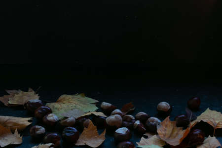Autumn leaves and chestnuts on a dark marble background, moody winter feelings