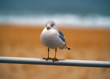 distantly: Lone Gull Stock Photo