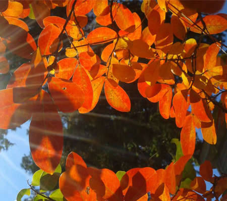 Sun Beam glisten on fall leaves