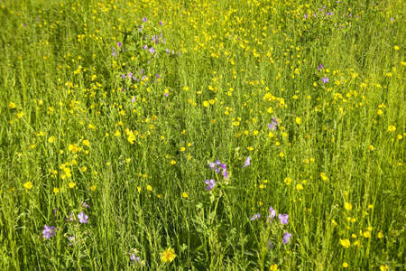 lakeview: Spring flowers in Centennial Valley, Lakeview, MT