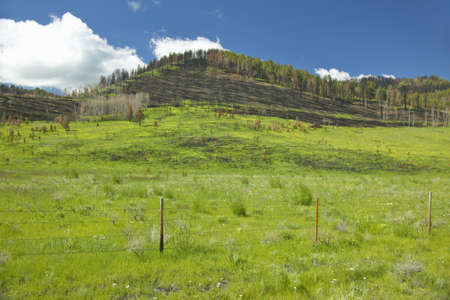 scorched: Scorched hillside and fresh spring growth in Centennial Valley, Lakeview, MT Stock Photo