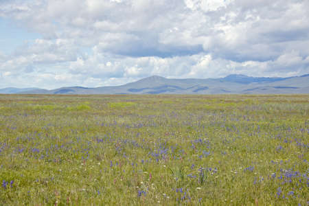 centennial: Praterie primavera e le montagne a Centennial Valley vicino a Lakeview, MT Archivio Fotografico