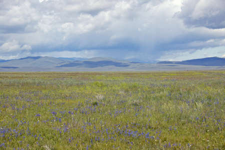 lakeview: Spring grasslands and mountains in Centennial Valley near Lakeview, MT Stock Photo