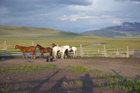 lakeview: Arabian horses running in corral at Peggy Delaneys ranch in Centennial Valley, near Lakeview, MT