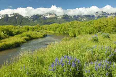 runoff: Mountain water runoff with purple lupine and mountains in Centennial Valley, near Lakeview, MT
