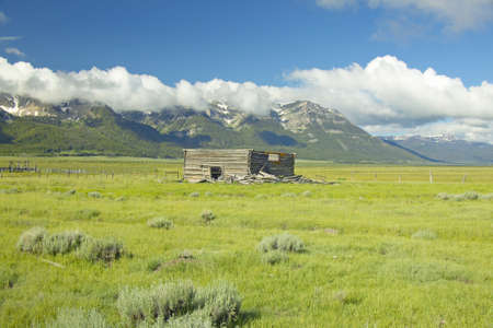 lakeview: Purple lupine surrounding deserted cabin with mountains in Centennial Valley, near Lakeview, MT Stock Photo