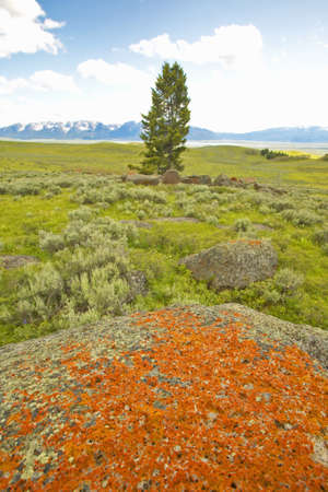 lakeview: Ancient orange lichens growing on rocks in Centennial Valley near Lakeview, MT Stock Photo