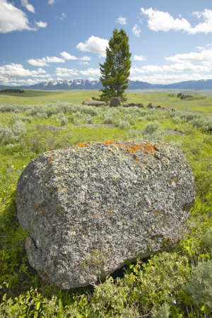 lakeview: Tree and ancient orange lichens growing on rocks in Centennial Valley near Lakeview, MT