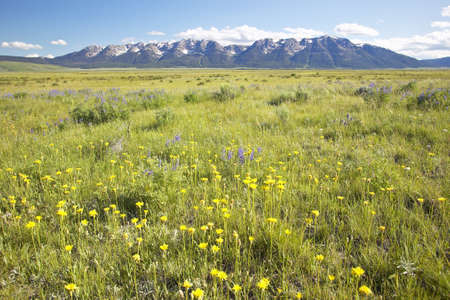 lakeview: Spring flowers in Centennial Valley near Lakeview, MT