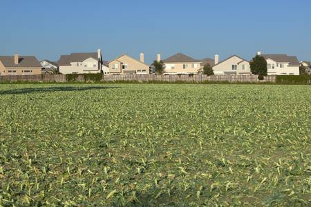 Farmers fields with crops by encroaching housing development subdivision in Santa Paula, CA Editorial