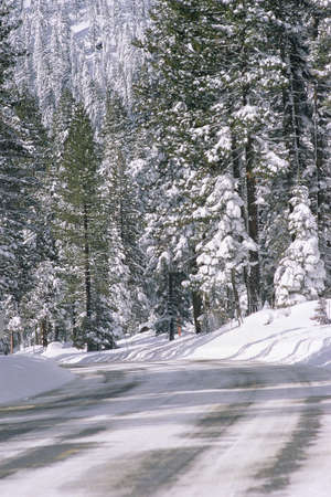 Road in snow covered forest, Northern California
