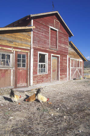nv: Western barn with roosters on route 50 in NV
