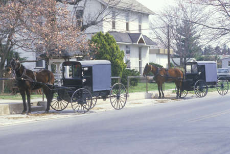pa: Two horses and carriages in an Amish farming community, PA