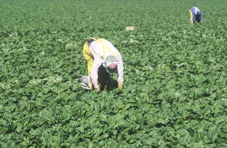 joaquin: Migrant workers harvest crops in San Joaquin Valley Editorial