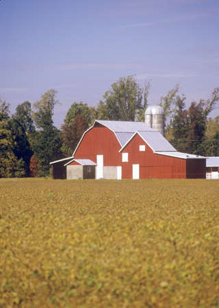 md: Red barn and outbuildings, Eastern Shore, MD