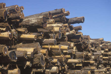 lumber mill: A pile of logs tagged for processing at a lumber mill in Willits, California Editorial