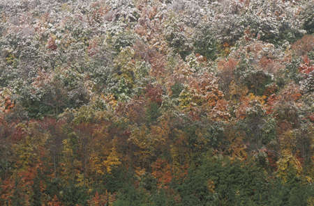 Snow on Autumn Trees, Allegheny Mountains Stock Photo - 19996509
