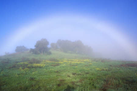 Rainbow In A Field, Ojai, California