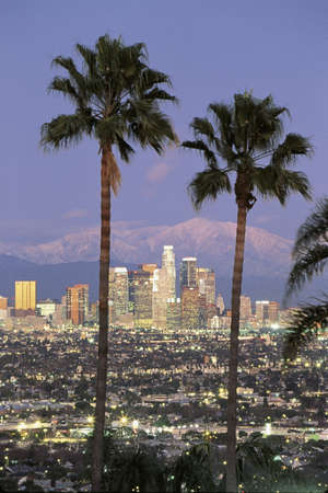 on palm tree: This is the Los Angeles skyline with two palm trees in the winter. Snowy Mount Baldy is in the background. It is the view from Baldwin Hills at dusk.