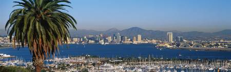 This is the San Diego Bay and harbor. It is the view from Shelter Island at sunset. There is a large palm tree to the left and many boats moored in the harbor.