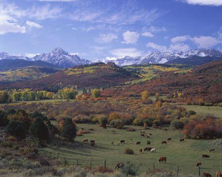 divides: Esta es la Cordillera de Sneffels cerca de la divisoria de Dallas. La altitud es de 4.150 metros. En el primer plano es un rancho de ganado de pastoreo con ganado. Hay colores del oto�o en el follaje con un cielo azul y nubes blancas. Foto de archivo
