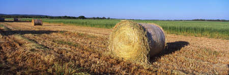 These are rounded hay bails made from freshly cut hay in the field. They are generously spaced apart in the field. photo