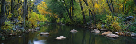 cottonwood  tree: This is Cottonwood Canyon in the autumn. There is a stream flowing through the canyon.