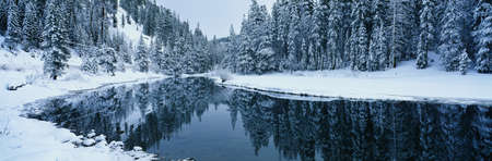 This is the Lake Tahoe area after a winter snow storm. There is snow covering the trees surrounding a stream. The winter trees are reflected in the stream. photo