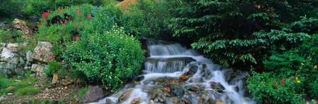 yankee: This is Yankee Boy Basin. There are alpine flowers surrounding the water flowing through the basin.