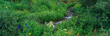 yankee: This is the Yankee Boy Basin. There are alpine flowers surrounding the water flowing through the basin.