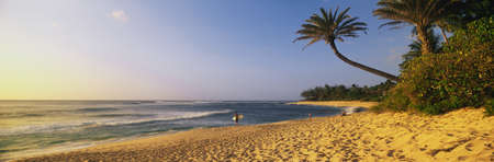 This is the north shore of the island of Oahu. On the right is a palm tree stretched above the sandy beach below. On the beach is a surfer and is surfboard walking alongside the ocean.