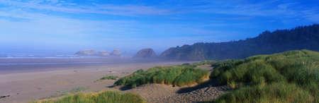 これは、オレゴン州の海岸に沿って砂と岩の多いビーチです。ビーチやビーチだけでなくに沿って成長する草の斑状の領域に沿ってわずかな霧があ