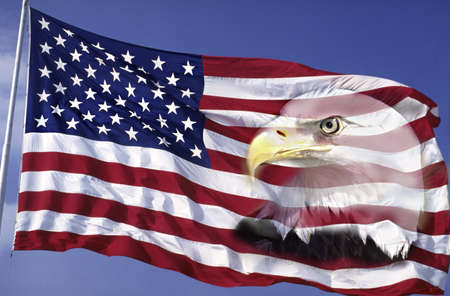 portraiture: This is an American flag waving in the wind against a blue sky.  An American bald eagle is digitally composited into the right side of the flag into the red and white stripes. This is a digitally created image.
