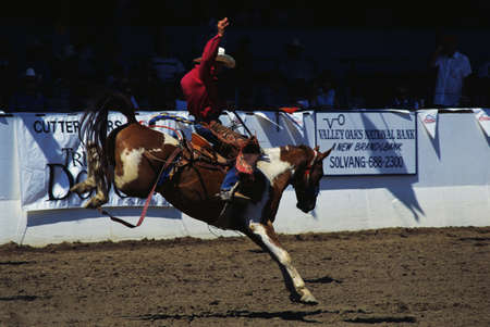 warren: This shows saddle bronco riding at the Santa Barbara Old Spanish Days, Fiesta Rodeo & Stock Horse Show. It took place at the Earl Warren Showgrounds.