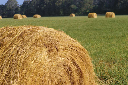 Rolled hay bale with field beyond