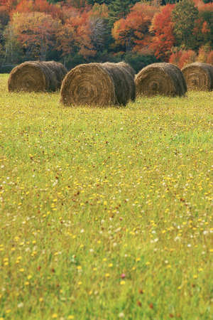 hay bales: Rolled hay bale with field beyond