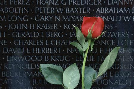 Red rose in front of Vietnam Veterans Memorial in Washington, DC 版權商用圖片 - 20491880