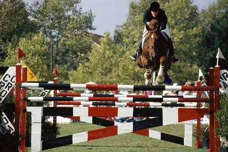 Cavallo e cavaliere saltando recinzione Editoriali