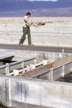 replenishing: Worker feeding fish at hatchery Editorial