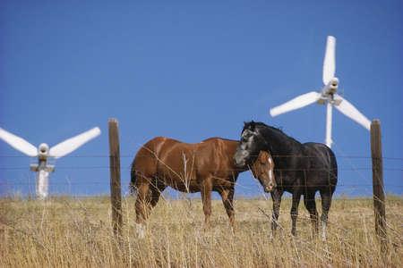 altamont pass: Horses on wind farm Stock Photo
