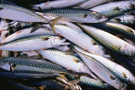 Pile of mackerel fish Stok Fotoğraf