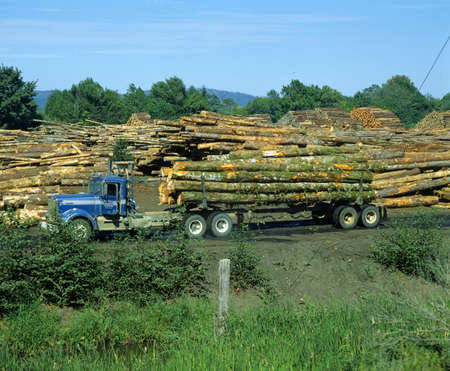 logging truck: Logging truck surrounded by cut timber