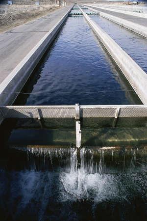 fish tank: Replenishing tank at fish hatchery