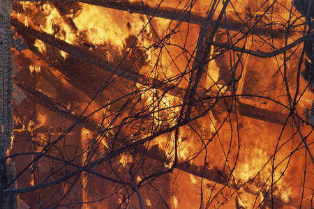 Branches silhouetted against raging fire